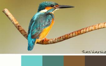الألوان في الديكور: كيف تؤثر ألوان ديكور المنزل على الإنسان