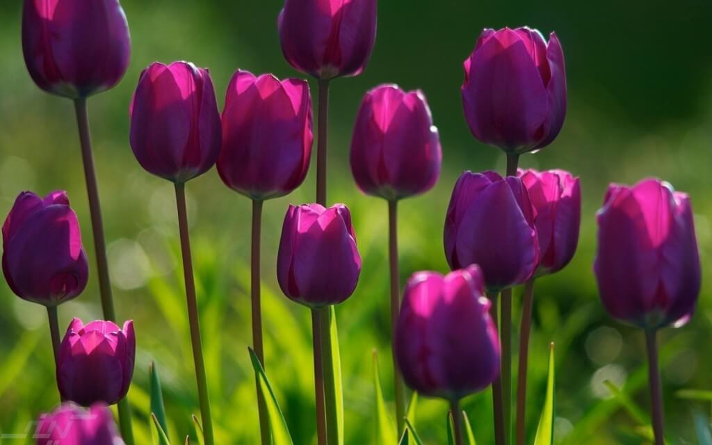 874868-purple-flowers-background