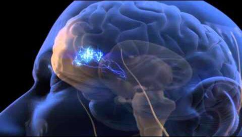 المخ يعالج و يرسل الاحساس بالألم لمختلف أجزاء الجسم و لكنه لا يحس بالالم نفسه.